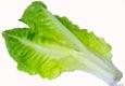 """Salotų """"Romaine"""" lapas"""
