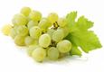 Vynuogės žaliosios